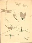 Isaac-Dragonfly