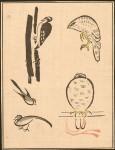 Isaac-Woodpecker-Hawk