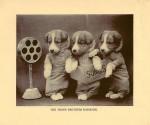 The Three Brothers Bassbark