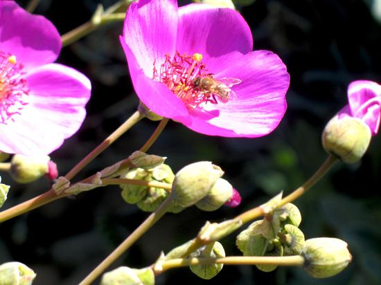 bee-in-succulent1