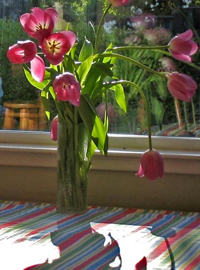 tulip4-4
